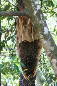 Honey Comb from Child Negligence Lawsuit Personal Injury Lawsuit Sandwich Illinois